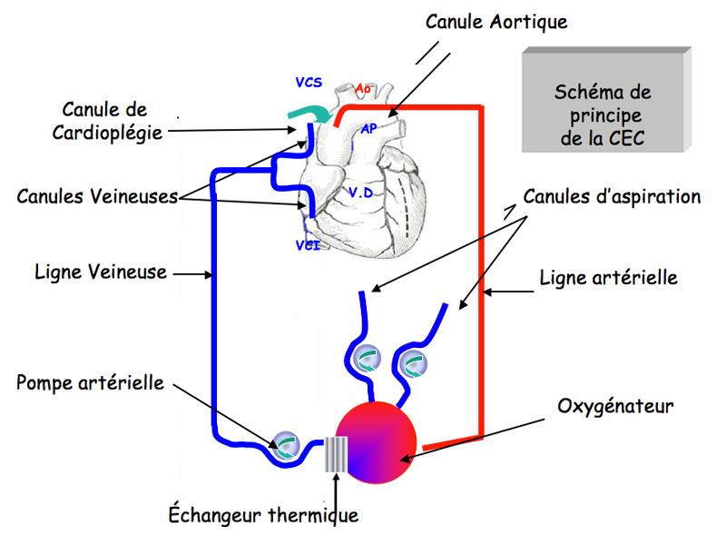 definition de la circulation sanguine